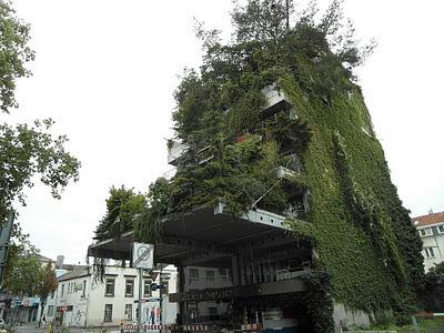 Jardín vertical y muro verde