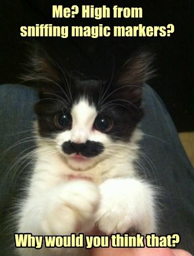 Kitty - High From Sniffing Magic Markers