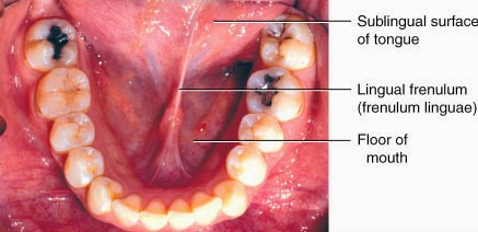 frenulum linguae punca pelat