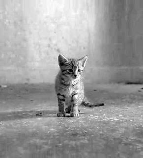 black and white photography of a cat