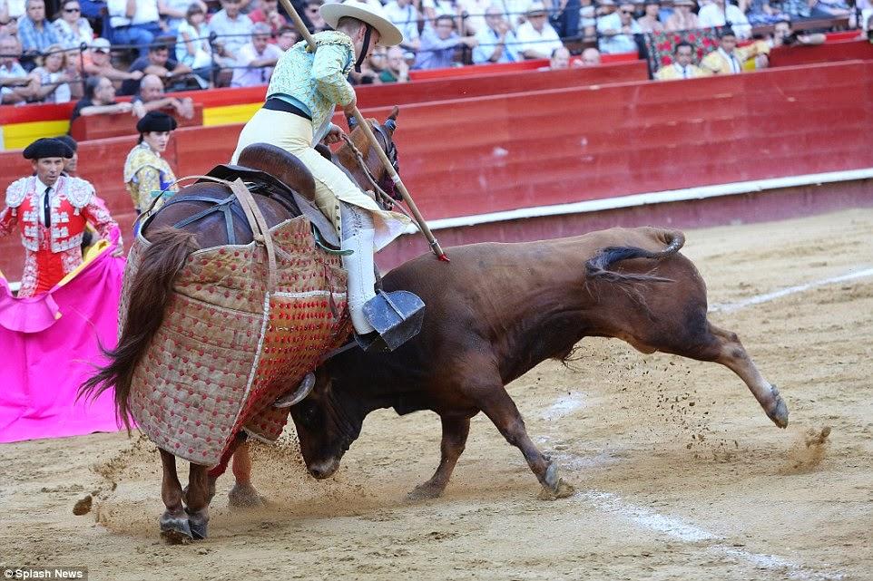 bull fighting essay