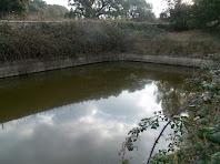La bassa del Pujol