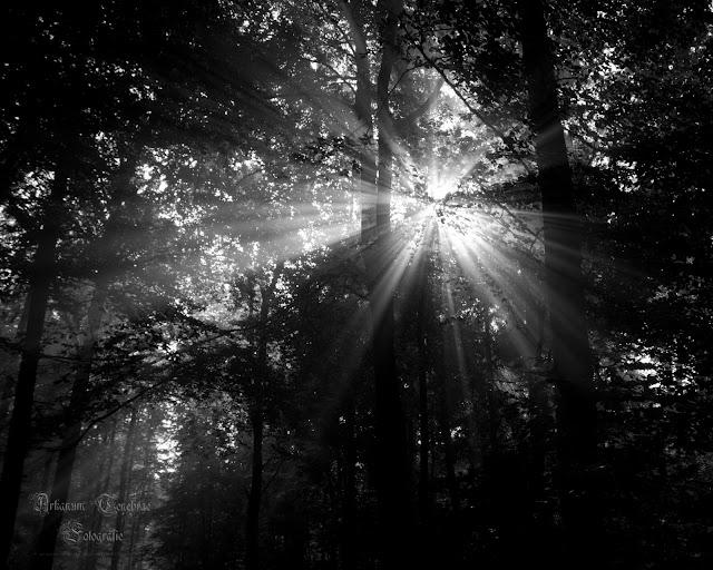 Sonnenstrahlen die durch den Nebel scheinen