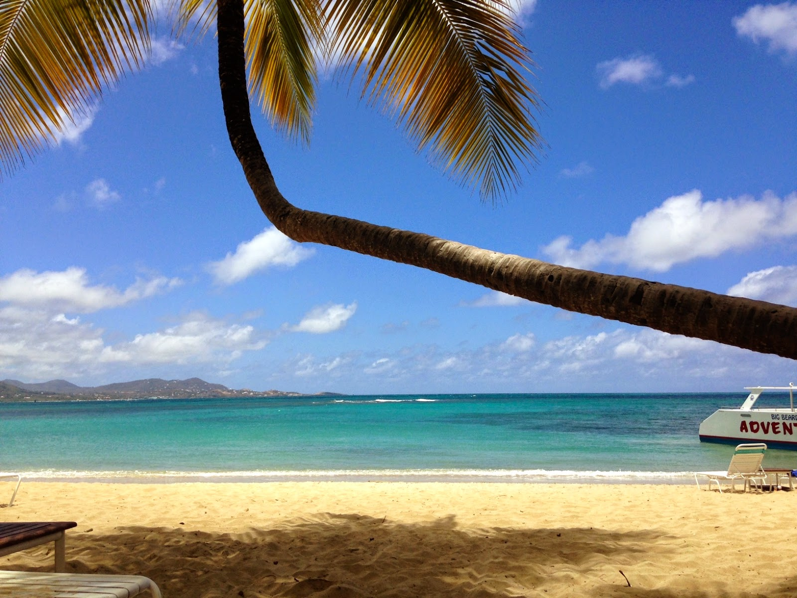beach and palm tree at the buccaneer st croix