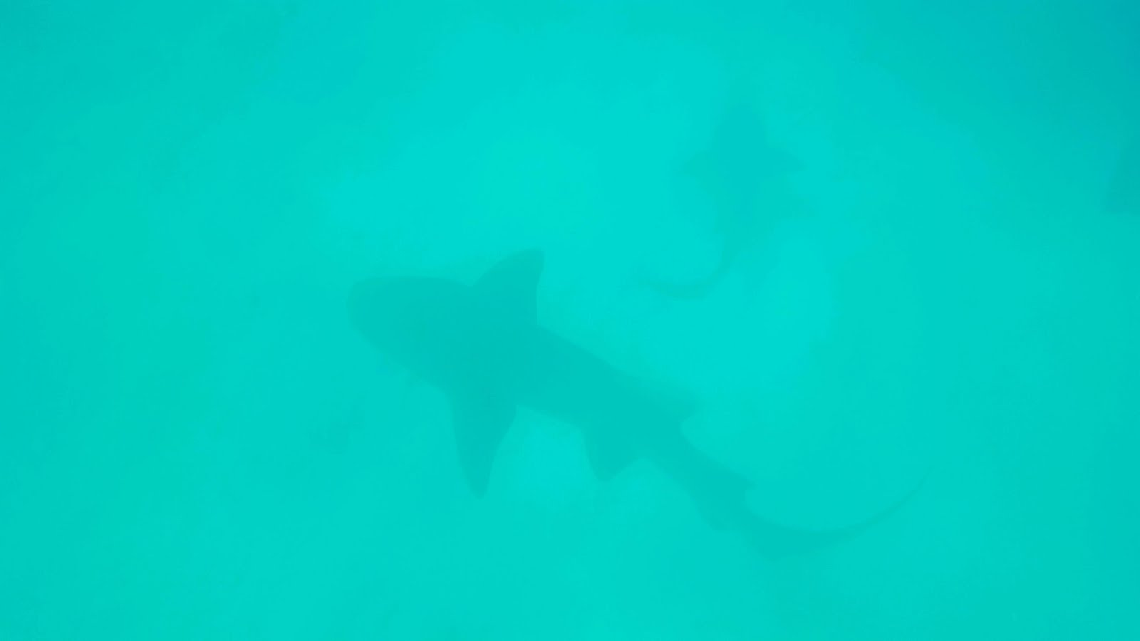 The Actual Chances Of Being Attacked By A Shark Are About One In 115 Million Over Last Ten Years There Have Been Total 244 Attacks