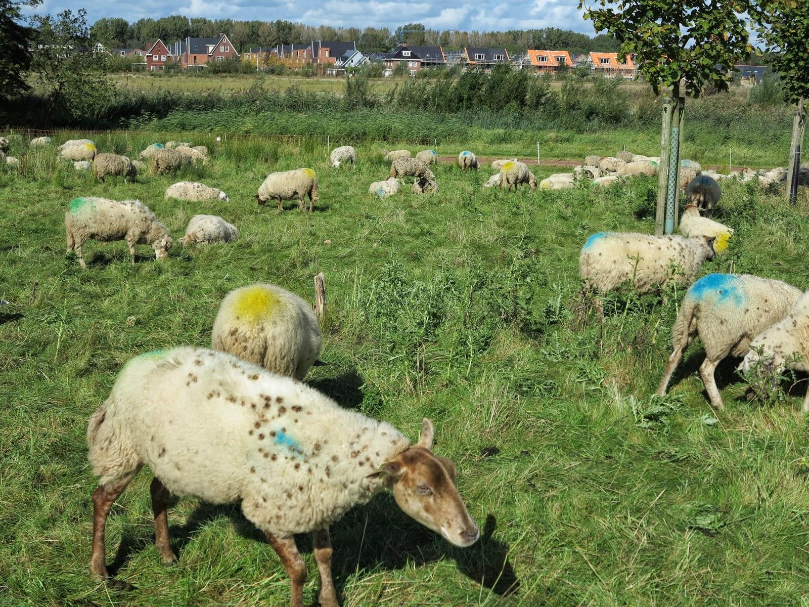 Nieuws van onze schaapherder martin oosthoek p a r for Schapenboerderij te koop