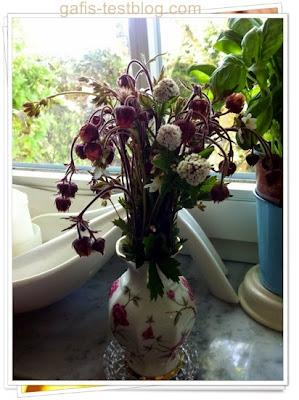 Wiesenblümchen und Blutströpfchen
