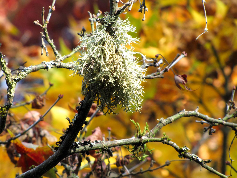 OnTheMove-at Home: An Autumn Walk in Kubota Garden