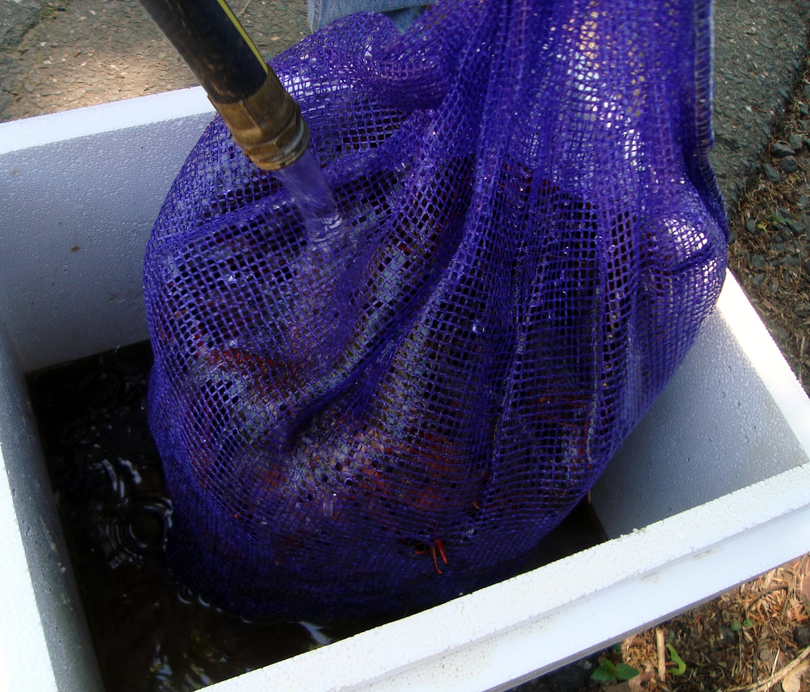 Here Is Our Process, Which Was For 15 Pounds Of Live Crawfish A Couple In
