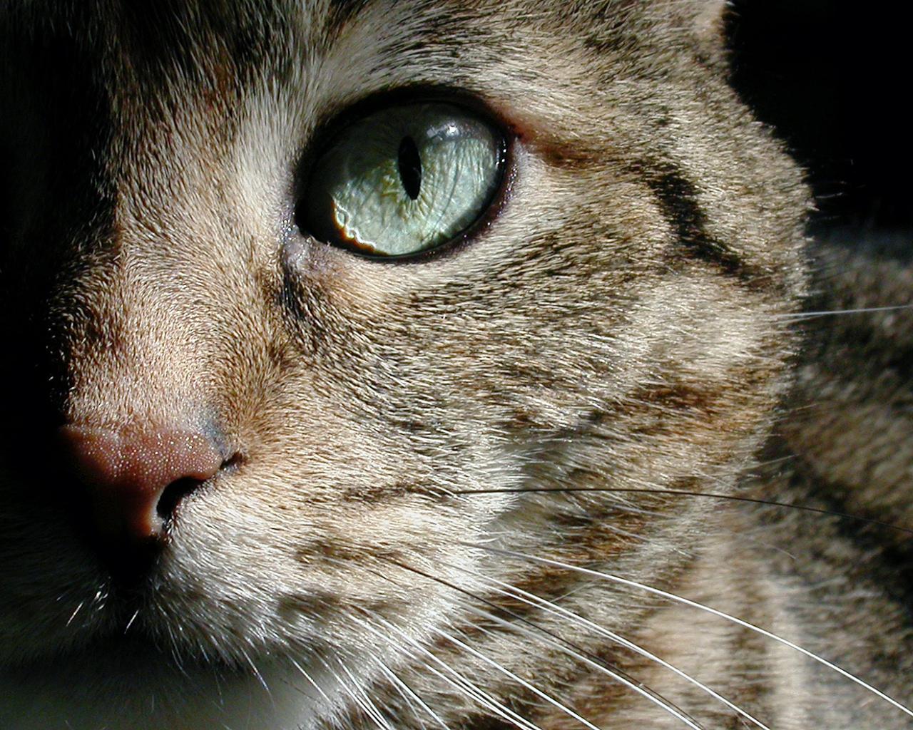 best amazing animal wallpaper best blog wallpaperlikjen create
