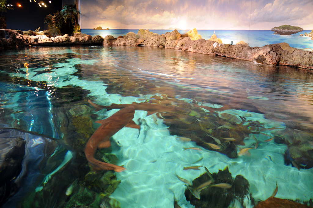 Tennessee Aquarium is located in Chattanooga