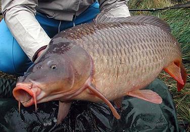 Pesca profesional informaci n sobre peces de agua dulce for Piletas de agua salada en zona sur