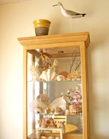 organizing shell collection in glass cabinet