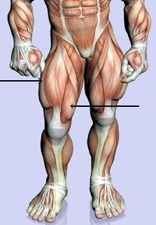 legal steroids wiki