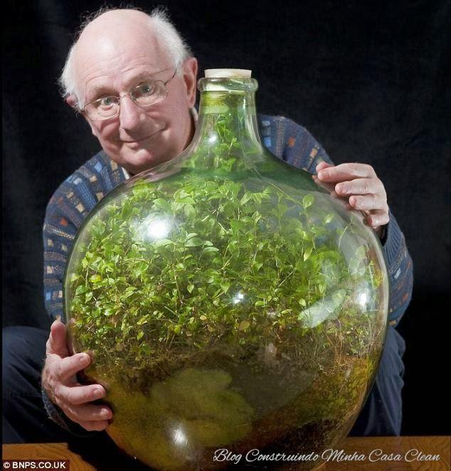 mini jardins em vidro : mini jardins em vidro:Construindo Minha Casa Clean: 50 Terrários Criativos para Decorar sua