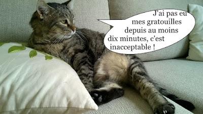 Gros chat gris sur le canapé réclame des gratouilles.