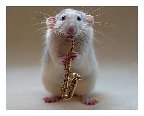 Q Comen Los Golden Retriever Cute Mouse