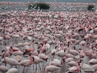 Reisen Afrika Kenia Nakuru