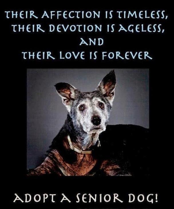 ~ ADOPT/FOSTER A SENIOR DOG ... TODAY! ~