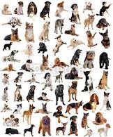 Kochane Psy