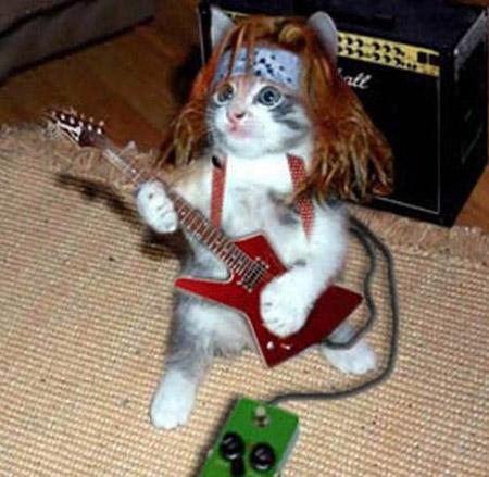 (Megapost) Imágenes de gatos graciosos.