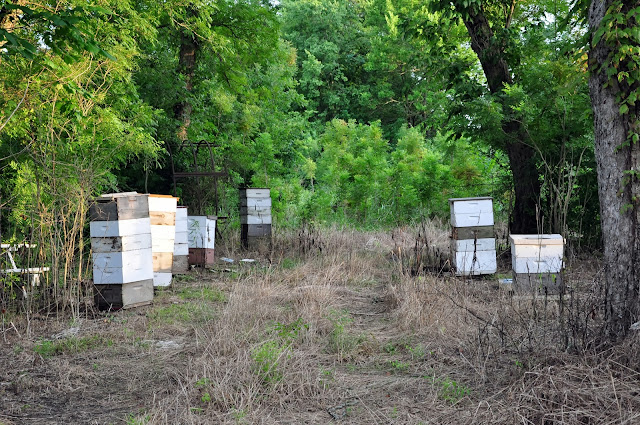 Bee Hives Hickory Ridge Studio