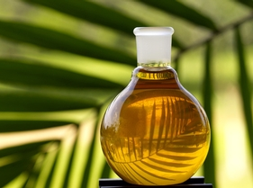 Palm Oil Mill Business Plan