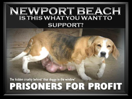 NEWPORT BEACH CITIZENS DO NOT CONDONE MILLIONS OF NET SALES IN OUR CITY SUPPORTING CANINE TORTURE