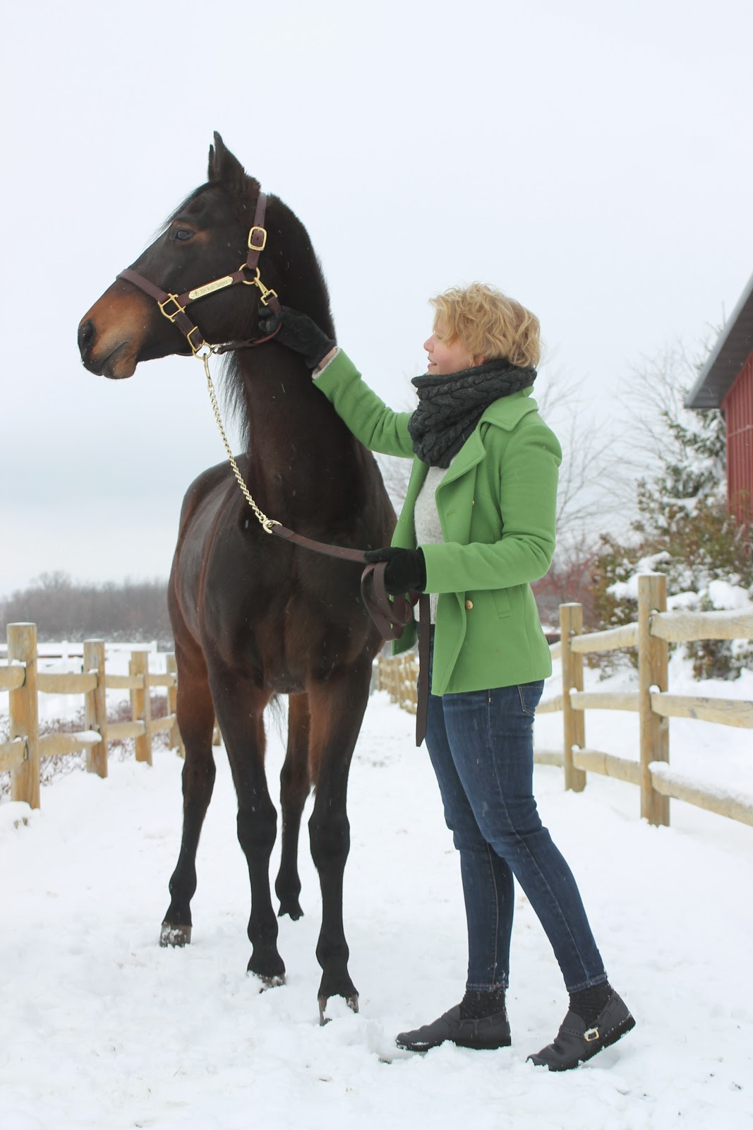 Morgan Show Horse Ledyard's Tiger Lily