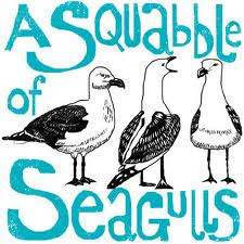 squabble-of-seagulls-collective-noun