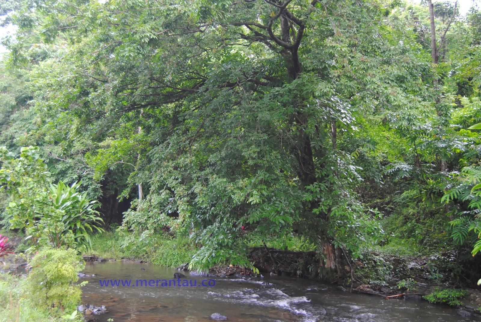 Wisata alam sungai kembang Kalsel