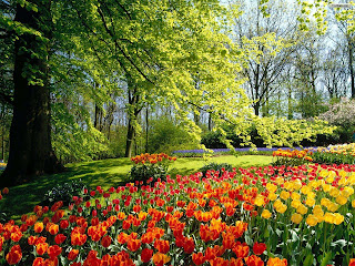 taman Bunga bunga tulip