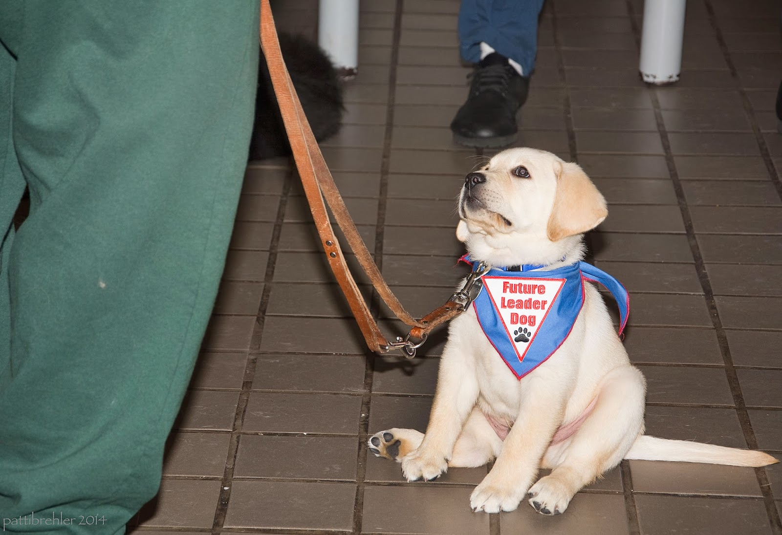 A small yellow Lab puppy is sitting with his rear legs askew on a light brown tile floor. He is wearing a blue bandana with a white triangle patch with the words Future Leader Dog in red and a black paw print. He is looking up to the left at an inmate raiser who is out of view. The raiser's legs in green pants are the only thing visible, and a brown leather leash attached to the puppy.