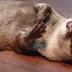 Όλα τα ζωάκια έχουν παιδική ψυχή (βίντεο)...
