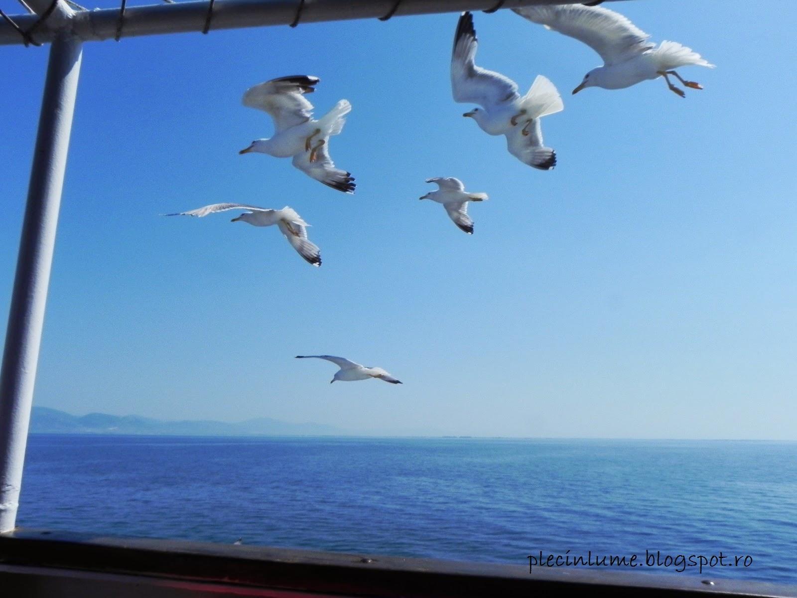 Pescarusi langa feribot