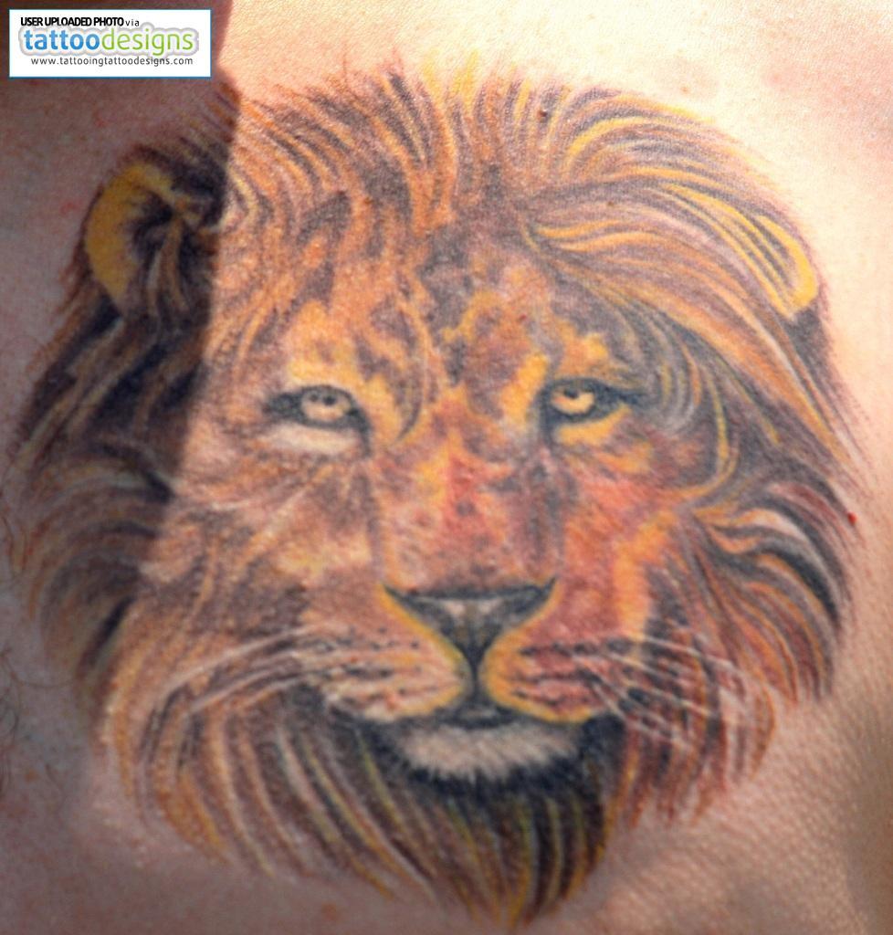 wild tattoos lion tattoo design ideas. Black Bedroom Furniture Sets. Home Design Ideas