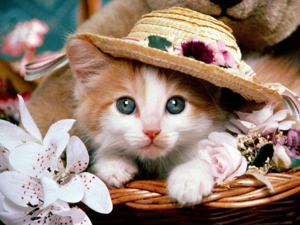 Cute And Lovely Cat HD Wallpapers