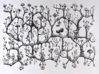 Mycelium_rhizome