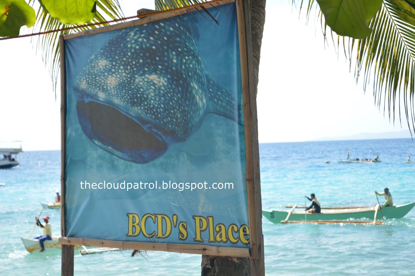 Butanding, whale shark, cebu, oslob, philippines, BCD, BCD's place, resort