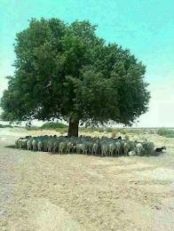 Η φύση προνοεί