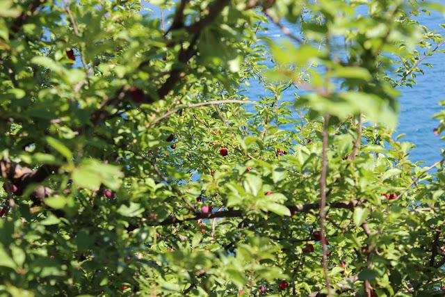 sarıyer-rumeli kavağı-anadolu kavağı-yoros kalesi