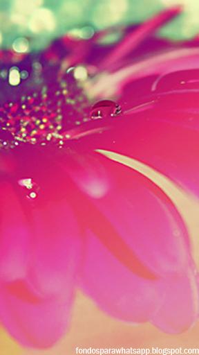 Corazones con Brillos - Imagenes de Amor y Graciosas para