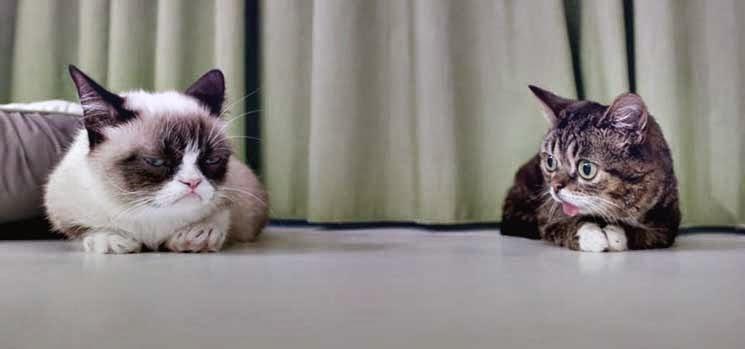 Dua ekor kucing bertemu