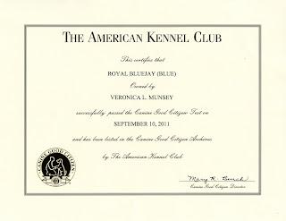 Blue greyhound canine good citizen certificate