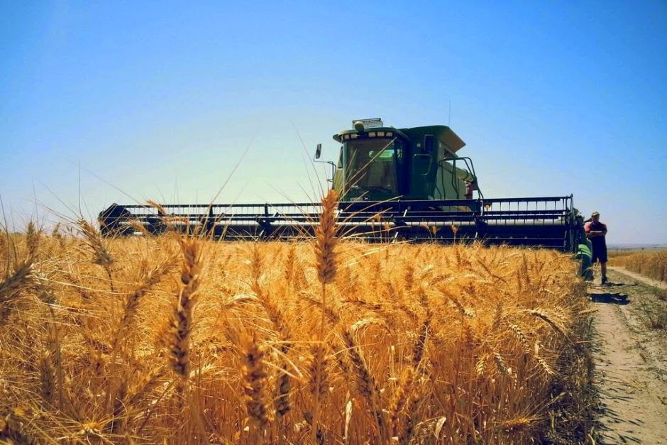 http://www.abc.net.au/news/2015-03-19/rural-crops-grain-genetic-modification-policy-trials-research/6331718