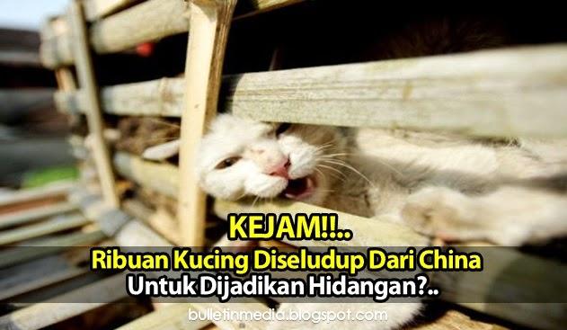 Kejam: Ribuan Kucing Diseludup Dari China Untuk Dijadikan Hidangan?..