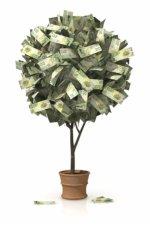 La semilla del conocimiento financiero