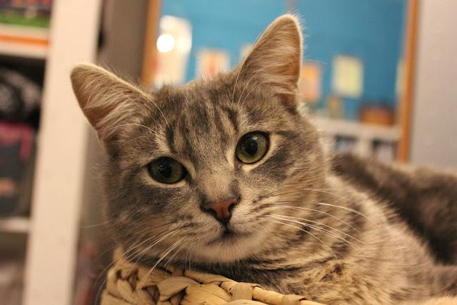 A very cute kitty named Loki