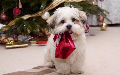 Perrito con regalo de Navidad y Arbol con esferas