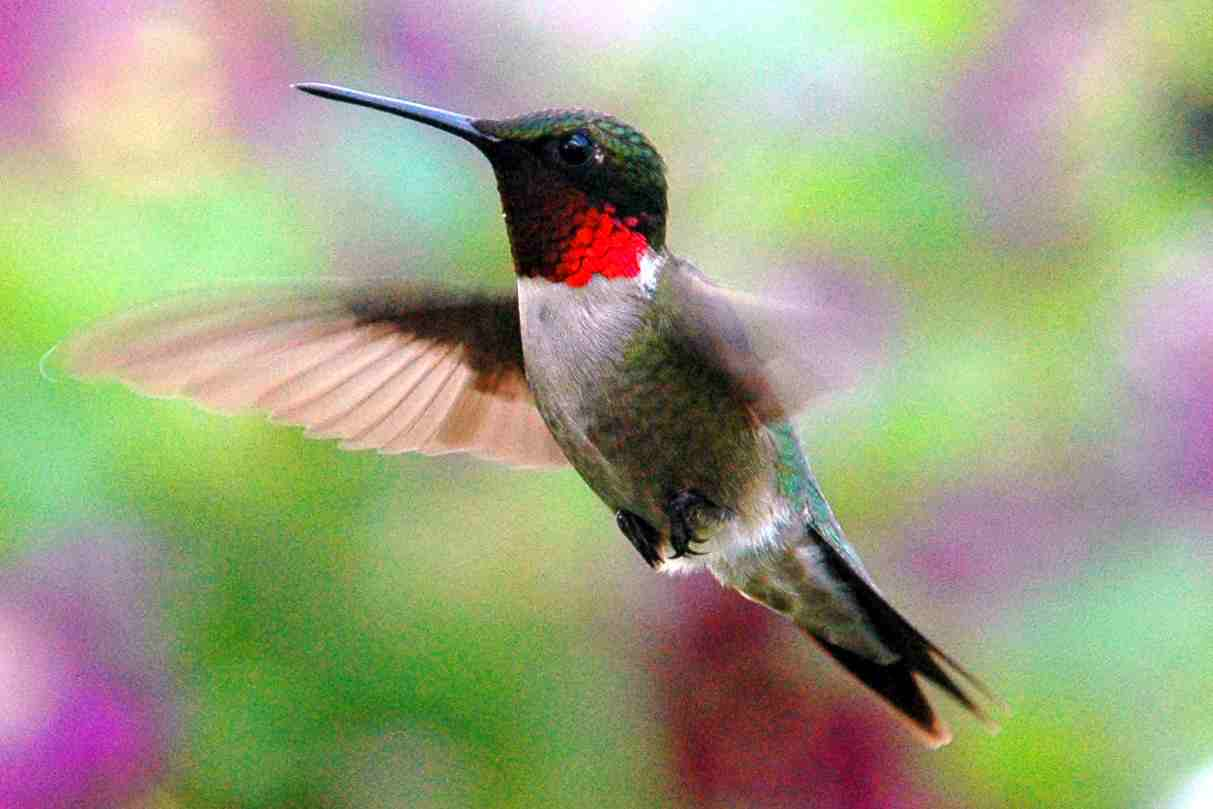 Nc Mountain News Learn About Hummingbirds At Blue Ridge
